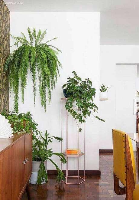 50- A planta samambaia decora a parede com elegância e estilo. Fonte: Histórias de casa