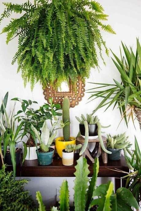 57- A planta samambaia é destaque na coleção de plantas da varanda em apartamento. Fonte: Pinterest