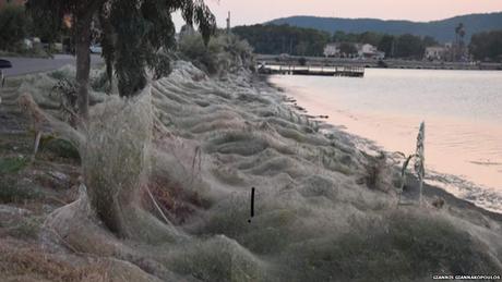 Altas temperaturas e alimento abundante para as aranhas criaram as condições ideais para o surgimento da superteia