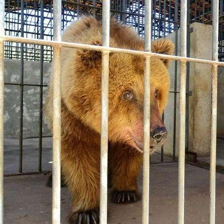 Marsha ficou conhecida como 'a ursa mais triste do mundo' depois que grupos de defesa dos animais denunciaram sua história