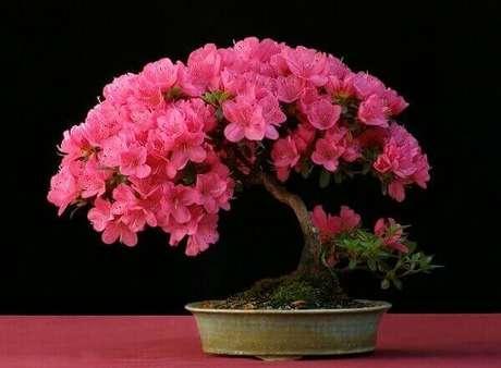 17- A azaleia bonsai pode ser colocada em mesas laterais ao sofá. Fonte: Jardin.blogspot