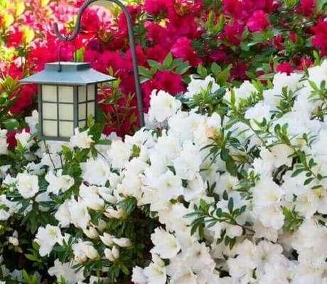 50- As azaleias brancas decoram os jardins de condomínios de apartamentos. Fonte: Pinterest