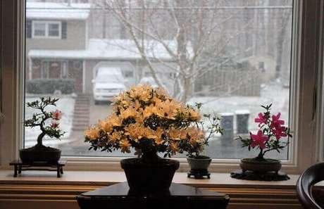 23- A azaleia bonsai amarela se destaca na decoração da sala de apartamento. Fonte: Forumeiros