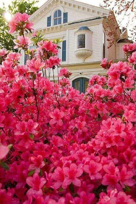 25- A azaleia é uma ideal para decorar a fachada de residências. Fonte: Planta Sonya