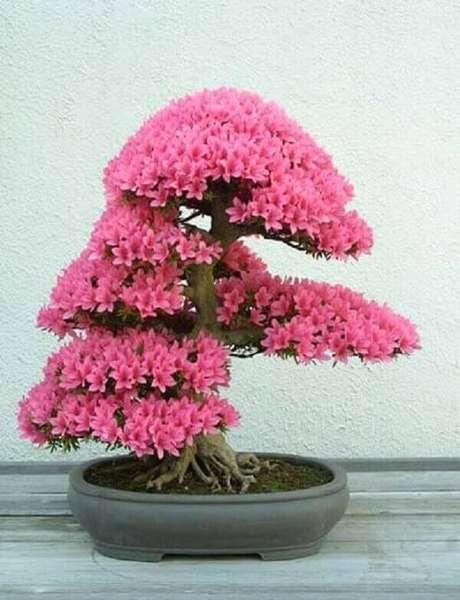 32- A azaleia bonsai tem poda que favorece a floração abundante das flores. Fonte: Pinterest
