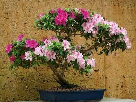 6- Com a azaleia bonsai você pode decorar a sala de estar ou sala de jantar. Fonte: Divã Veterinário