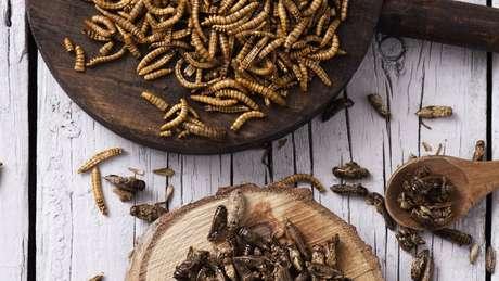 FAO destaca propriedades nutricionais dos insetos
