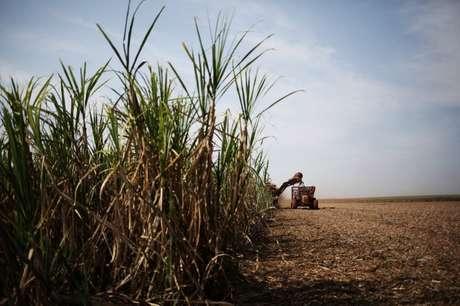 Colheitadeira em lavoura de cana-de-açúcar 15/09/2016 REUTERS/Nacho Doce