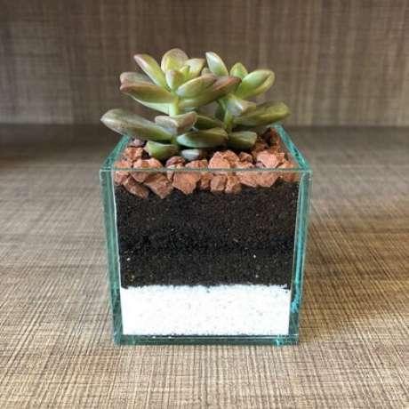 14. Cachepot de vidro pequeno com suculenta. Foto de Ateliê de Lembranças