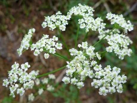 12. Flor do campo branca na natureza. Foto de American Southwest