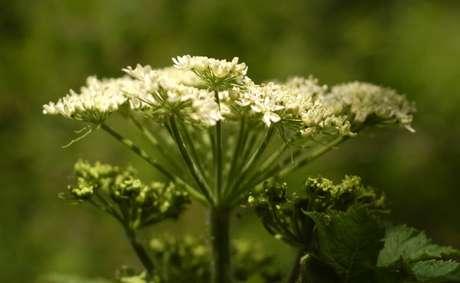 47. Flor do campo branca pequenininha na natureza. Foto de The Lens Flare