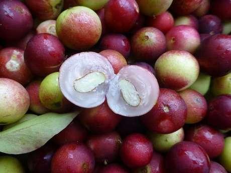 Camu-camu, fruta rica em vitamina C