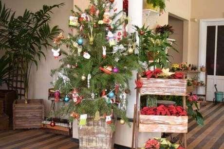 2- O pinheiro de natal natural decora as festas simples e sofisticadas. Fonte: Portal da Cidade Brusque