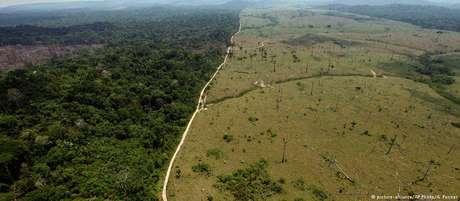 Desmatamento na Amazônia, segundo estudo, pode triplicar sob Bolsonaro
