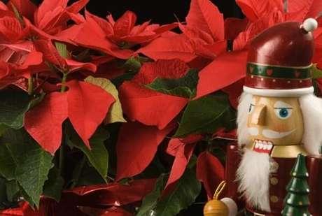17- A flor de natal é uma tradicional decoração das festas de fim de ano. Fonte: Getty Images
