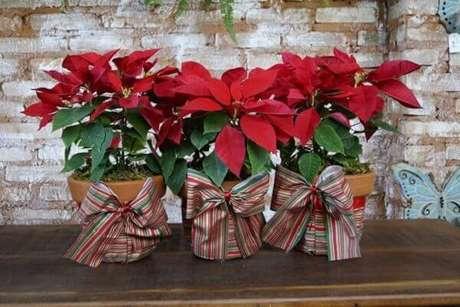 32- Os vasos de cerâmica com flor de natal foram enfeitados com fitas listradas na cor verde, vermelha e branca. Fonte: Assinatura Floral