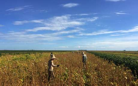 Trabalhadores em lavoura de soja em São Desidério, na Bahia; a China é a principal compradora da soja brasileira