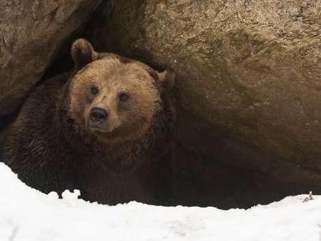 Muitos animais hibernam no inverno, época em que a temperatura é muito baixa e os alimentos se tornam escassos