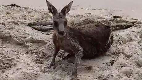 O animal ficou assustado, e por isso entrou na água pela segunda vez