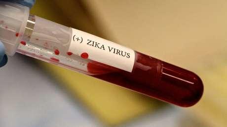 Zika foi encontrado em macacos, mas pesquisadores ainda precisam estabelecer se carga viral é suficiente para estabelecer ciclo silvestre