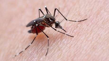 Atualmente, Zika é considerada doença endêmica e urbana no Brasil, transmitida apenas pelo mosquito Aedes aegypti