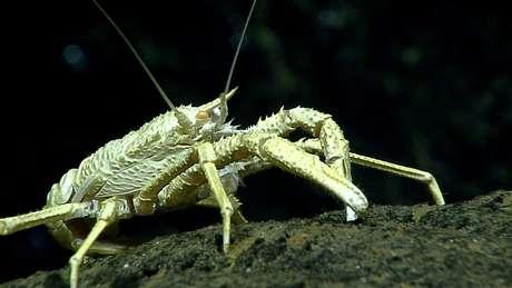 As espécies que vivem no fundo do oceano enfrentam condições extremas