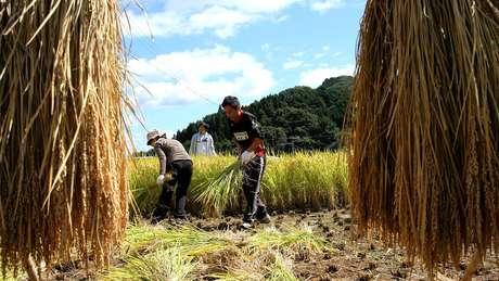 Medida ajudaria a aliviar problema de falta de mão-de-obra em setores como a agricultura
