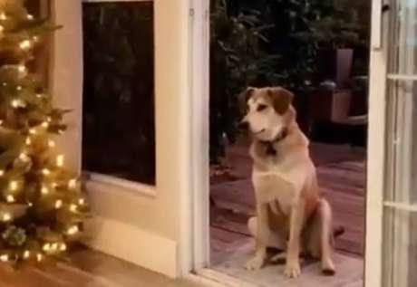 Cachorro sentado à porta da casa