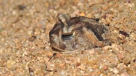 Na seca, para se defender da desidratação, os animais se enterram ou procuram micro-habitats com umidade e temperatura mais fria