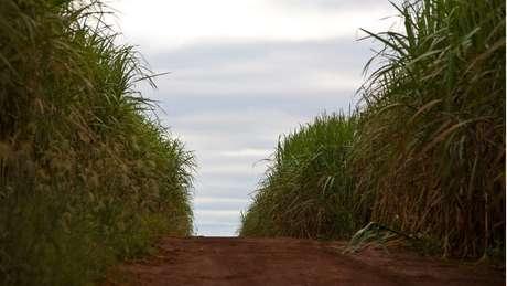 Empresário controlava a maior parte da área de cultivo do país