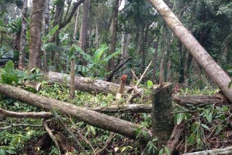 Derrubada aconteceu numa área em que os limites do parque se sobrepõem a uma fazenda de produção de bananas