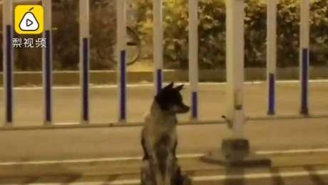 O site Pear Video disse que o cachorro está neste local desde que sua dona morreu, em 21 de agosto