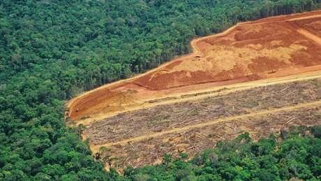 Desmatamento: se passar de certo ponto, as consequências podem ser irreversíveis, dizem pesquisadores