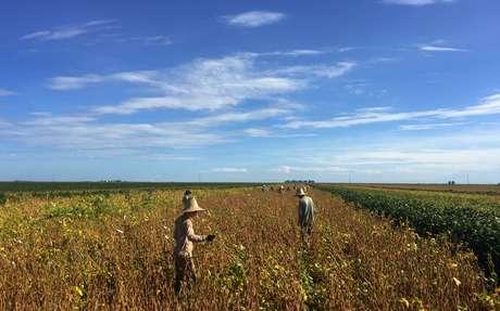 Trabalhadores em lavoura de soja em São Desidério, na Bahia 21/03/2018 REUTERS/Roberto Samora
