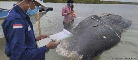 Cachalote encalhado na Indonésia tinha seis quilos de plástico no estômago