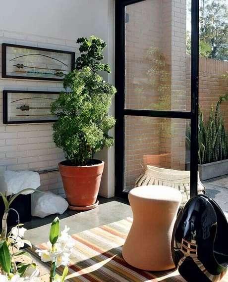 12- A árvore da felicidade é uma das plantas para dentro de casa com fácil cultivo que pode atingir até 2 metros de altura. Fonte: Construtora Lira Coutinho