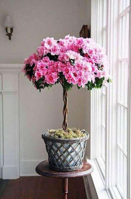 14- Uma das plantas para dentro de casa mais utilizada é a azaleia podada no estilo bonsai. Fonte: Pinterest