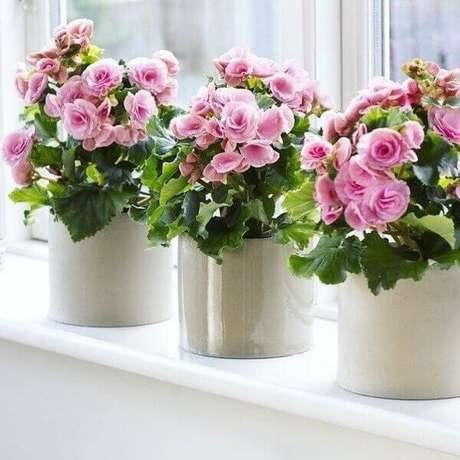 18- A begônia é uma das plantas para dentro de casa que pode ser plantada em vaso para colocar na janela. Fonte: Pinterest