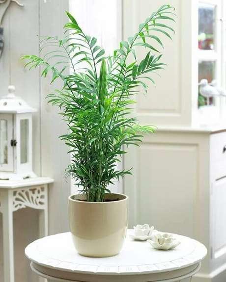 2- As plantas para sala como a Camedórea- Elegante podem ser colocadas em vasos ao lado de sofás ou até mesmo nos centros de mesas. Fonte: Hometeka