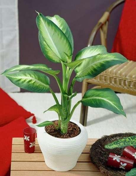 25- A comigo-ninguém-pode é uma das plantas para dentro de casa que toleram a baixa luminosidade do ambiente. Fonte: ConstruindoDECOR