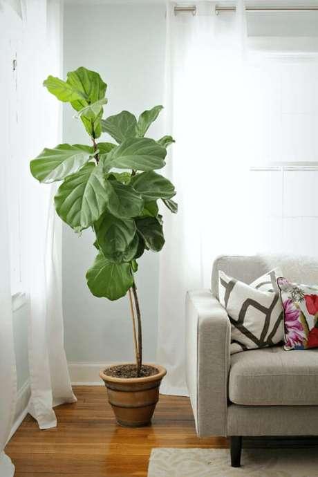 3- As plantas para dentro de casa podem preencher os espaços vazios na decoração. Fonte: The Decorfix