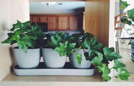 34- A hera inglesa é uma espécie ornamental que se adapta perfeitamente dentro de casa. Fonte: Carro de mola