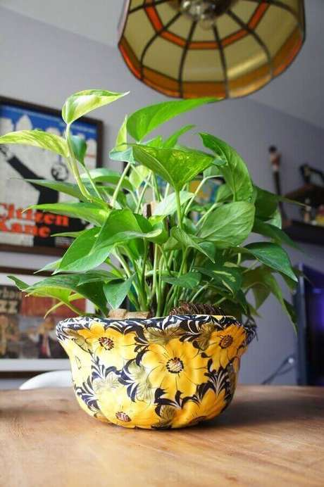 36- A jiboia é uma das plantas para dentro de casa que se adapta também a área externa. Fonte: Morando com Amor