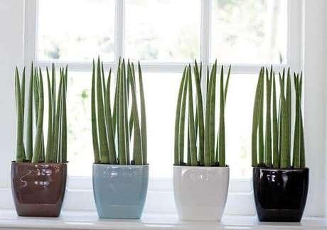37- A lança de São Jorge é uma das plantas para cultivar dentro de casa e possui características esculturais. Fonte: Hometeka