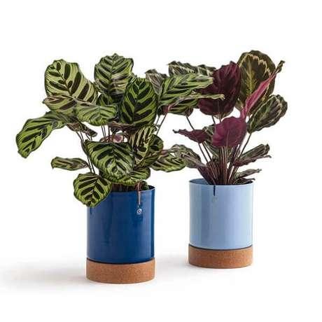 49- As marantas são plantas para dentro de casa que combinam com todos os estilos de móveis. Fonte: Casa Vogue