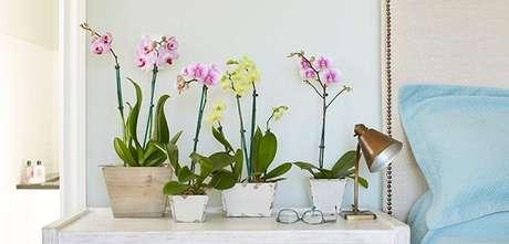 41- As orquídeas são plantas cultivadas dentro de casa coloridas e de tamanhos variados. Fonte: arqblog