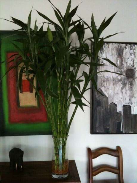 43- O pau d´ água é uma das plantas cultivadas dentro de casa que dispensa o uso de terra. Fonte: Pinterest