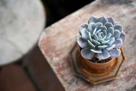 5- As rosas de pedras são plantas para cultivar dentro de casa. Fonte: Tecnisa
