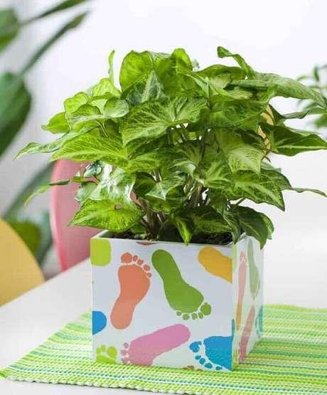 45- O singônio é uma planta para dentro de casa que suporta sombra e escassez de água. Fonte: Somos Verde