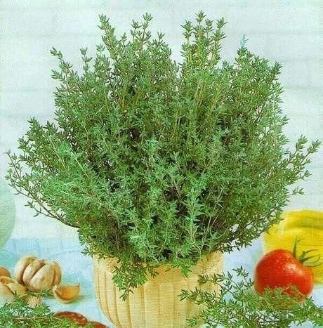 47- O vaso com tomilho é uma das plantas para dentro de casa que pode ser consumido como alimento. Fonte: Flores.Culturamix